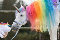 Unicornz do exist Unicorn And Fairies, Real Unicorn, Unicorn Horse, Unicorns And Mermaids, Unicorn Art, Unicorn Pictures, Baby Animals Pictures, Funny Animal Pictures, Cute Horses