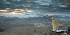 Dog Looking At Horizon
