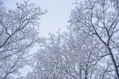 Trees covered in snow Winter Snow, Finland, Trees, Birds, Clouds, Pictures, Outdoor, Photos, Outdoors