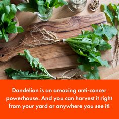 This Common Yard Weed is an Anti-Cancer Powerhouse via @afoodrevolution