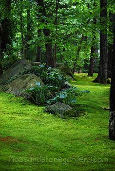 hostas on stone hill in moss lawn #mossgarden