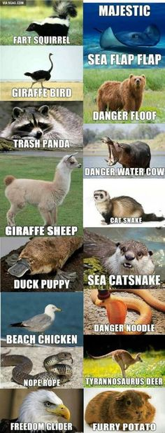 Alternate names for animals - Funny memes hilarious -You can find Memes and more on our website.Alternate names for animals - Funny memes hilarious - Funny Animal Jokes, Cute Funny Animals, Funny Animal Pictures, Funny Cute, Animal Puns, Funny Photos, Stupid Animals, Crazy Animals, Hilarious Pictures