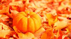 Pumpkin Backgrounds Top Fall Pumpkin Wallpaper And Screensavers 63 Images on Thephotocrafters Pumpkin Wallpaper, Fall Wallpaper, Wallpaper Ideas, Wallpaper Backgrounds, 1920x1200 Wallpaper, Leaves Wallpaper, Wallpaper Gallery, Nature Wallpaper, Baby In Pumpkin