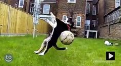 Dog fetch fails compilation is too funny...!