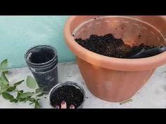 Rózsa gyökereztetése, dugványozása - Hogyan gyökereztessünk rózsát házilag - YouTube Planter Pots, Make It Yourself, Plants, Garden, Youtube, Garten, Planters, Gardening, Outdoor