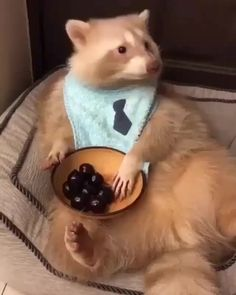 Beautiful Dance Done By This Cute Panda Please Follow Animals Board