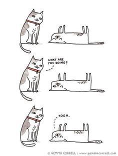 """Slapende poes """"doet yoga"""""""