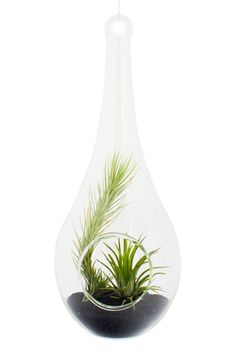 Terariu in Forma de Picatura #terariu #picatura #plante #natura #design #cadouri #aerium #ideicadouri