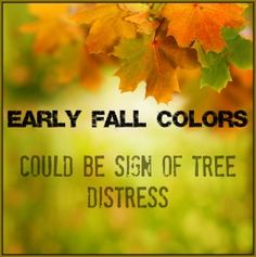 air pollution and plant deciduous trees Both evergreen and deciduous trees may suffer from common diseases and pests, but persistent air pollution, ash, and other toxic substances in the air are likely to cause more damage to evergreen trees than the deciduous ones.