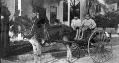 Coleman boys in donkey-drawn wagon - Saint Petersburg, Florida. ca 1912. Black & white photonegative, 4 x 5 in. State Archives of Florida, Florida Memory. <https://www.floridamemory.com/items/show/155429>, accessed 18 October 2016. Courtesy: State Archives of Florida, Tallahassee, FL (USA)