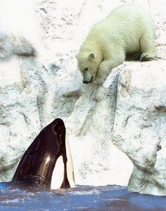 Orca and Polar Bear.
