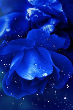 Blue rose water