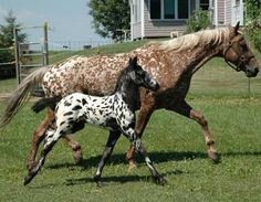 A foal of a different color.