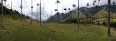 A short walk outside of Salento Colombia (this is not a jungle and it does not take 7 hours to get here) [OC] [756 x 2518] #reddit