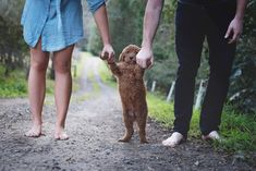 To stop people asking about babies, Matt and Abby decided to do a newborn photoshoot…with their dog!
