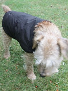 Recycled North Face Dog Coat Black Coats, UX/UI Designer