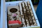 Package bees!