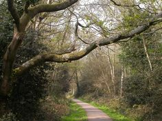 :: A footpath, Southampton Common, near to Portswood, Southampton, Great Britain by Alan Stewart Southampton England, Stonehenge, Isle Of Wight, First Night, Great Britain, Brighton, Angles, Postcards, Countries