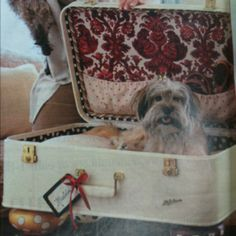 Suitcase dog beds! Sasha loves climbing in the suitcase when we are packing. She'd love this!!!
