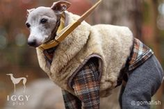 Italy Angolan Vest / Beigerey in IGGYplus italian greyhound clothes