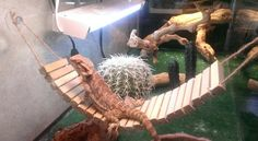 DIY Bearded Dragon Bridge Hammock - PetDIYs.com