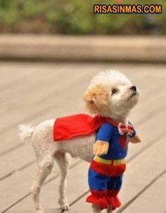Disfraces perrunos: Superman   Risa Sin Más