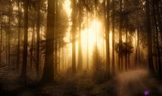 Filename: sunbeam widescreen retina imac Resolution: File size: 3330 kB Uploaded: Hunter Edwards Date: Full Hd Pictures, Free Pictures, Forest Photography, Landscape Photography, Inspiring Photography, Travel Photography, View Photos, Cool Photos, Misty Forest
