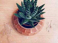 A faceted wooden pot showcases a favorite plant beautifully.