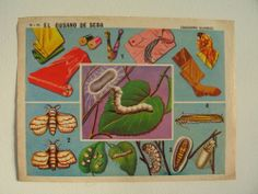Vintage School/Class Educational Poster-The Silk Worm & Uses Silk- Circa 1960s