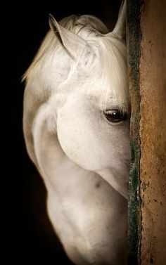 """""""Until one has loved an animal, a part of one's soul remains unawakened"""""""