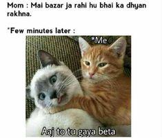 Funny Cat Memes Picture – Funny Cat Memes Photo – Cat Funny Memes Download Funny Cat Captions, Funny Cat Memes, Funny Posts, Dankest Memes, Hilarious, Best Cat Memes, Kawaii, Cool Cats, Haha