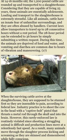 """Don't believe the lies about """"happy cows"""". DAIRY IS SCARY. Choose COMPASSION. Take care of your body. Protect the planet. {Go Vegan}"""