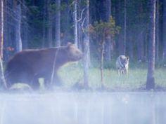 Finland's wonderful wildlife