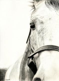 Horse Drawing  - Horse Fine Art Print -- this is amazing hope one day i can draw like this