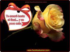 rosas con frases de amistad   imagenes+de+flores+de+rosa+para+facebook.png