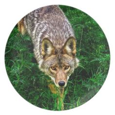 Coyote Party Plates