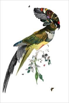 Kristjana S. Williams remixes Victorian wildlife illustrations with collage and vivid coloring - beautiful!