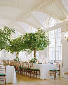 This Formal Wedding Proves How Timeless a Green-and-White Color Palette Really Is. Combining simply beautiful details with their own unique twist! Tree Centerpieces, Centerpiece Ideas, How To Dress For A Wedding, Washington Dc Wedding, Indoor Wedding, Tent Wedding, Wedding Receptions, Hotel Wedding, Wedding Bells
