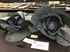 This prize #cabbage @HarrogateFlower