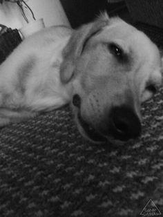 Spíí pššššš !!!!