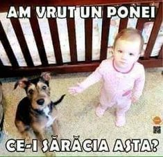 The 32 Funniest Baby Memes All in One Place - Funny Baby - As the commercial says: apparently riding the dog like a pony is frowned upon in this establishment! Hahaha The post The 32 Funniest Baby Memes All in One Place appeared first on Gag Dad. Funny Baby Memes, Funny Babies, Funny Cute, Funny Dogs, Funny Animals, Baby Humor, Funny Stuff, Kid Memes, Baby Memes