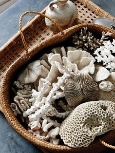 'A very old collection of antique coral. I inherited a stranger's collection, which is always revealing to know exactly what they had been attracted to!' says Kara. Production – Lucy Feagins / The Design Files. Brisbane, Coastal Style, Coastal Decor, Coastal Living, Home Decor Accessories, Decorative Accessories, Petits Cottages, Kara Rosenlund, Deco Originale