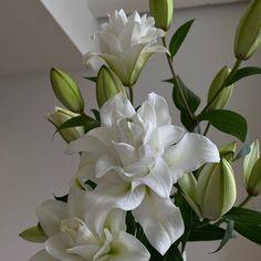 Dark Flowers, Pastel Flowers, Simple Flowers, Vintage Flowers, Beautiful Flowers, Purple Roses, Deep Purple, Pastel Pink, Pink Purple