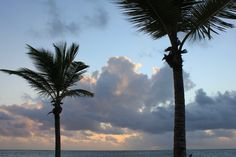 Palm tree silhouettes in the morning