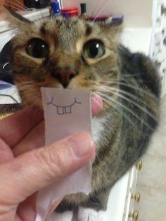 Pics For > Cute Cat Teeth