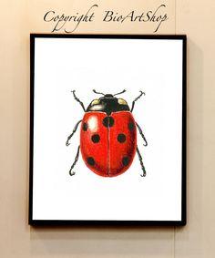 ladybug (coccinella)