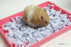 Make Hamster Bedding Similar to Carefresh Intro.jpg