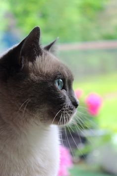 """""""If you can remember how many cats you have, you haven't got enough."""" --Anonymous"""