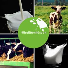 Suurin osa kotimaisesta maidosta tuotetaan tavanomaisilla maitotiloilla. Luomumaitotilojen osuus on pieni. Eläinten hyvinvoinnin arvioiminen eri tuotantomuodoissa on vaikeaa, koska hyvinvoinnin perustason ylittäviä, yksiselitteisesti sitovia tuotantomuotoon kohdistuvia määräyksiä on lähinnä vain vasikoiden kohtelussa ja lehmien kesälaidunnuksessa.
