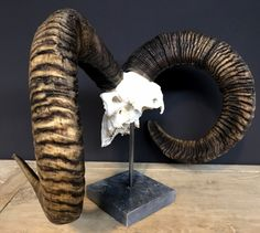 Blackbuck Skull Gifts Pinterest Skull Animal Skulls